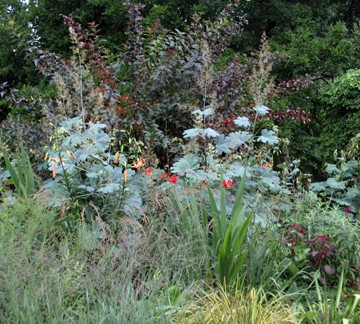 After seeing that silver-blue <em>Macleaya cordata</em> foliage at Chanticleer (www.chanticleergarden.org), how could I not want to plant some?