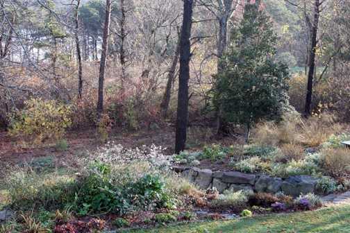 Poison Ivy Acres is larger than my former garden, and calls for even larger groups of plants. I'm just getting started.