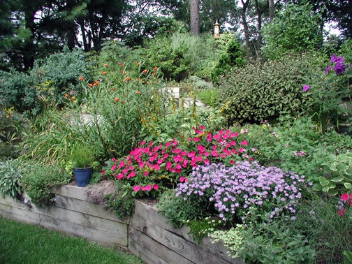 Even a small garden, such as my former tiny landscape, can be planted with larger groups of plants. Here, Aster 'Woods Blue', Fanfare Impatiens, and Asclepias 'Silky Red' make a splash in September.