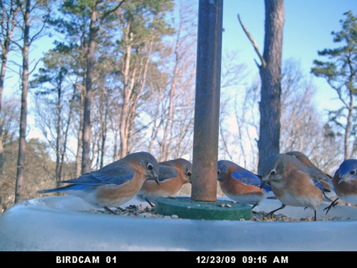 Bluebirds and Blessings