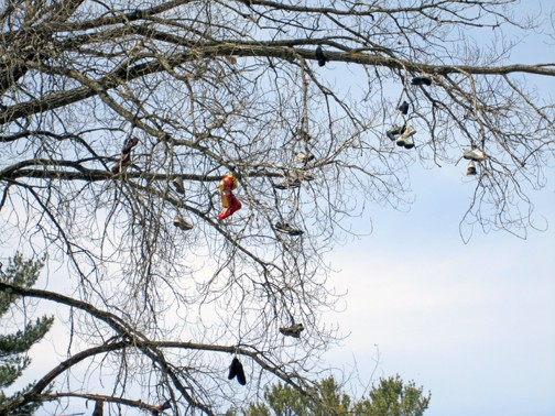 A (Shoe) Tree Grows In Wisconsin