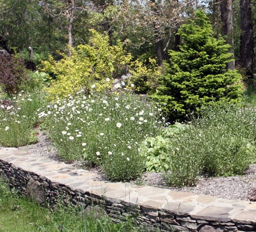 Weeds That Are Wonderful/Worrisome