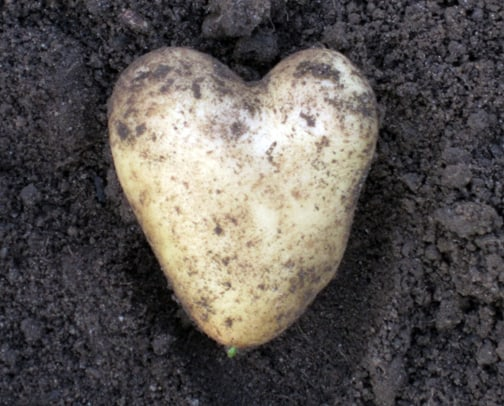 I Heart Carola Potatoes