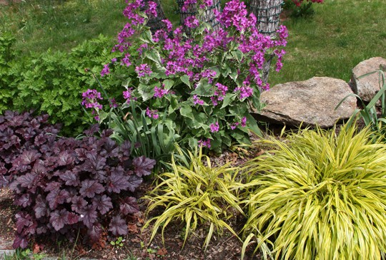 Right plant right person whole life gardening for Perennial grasses full sun