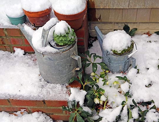 Winter Entertainment: You Can Grow That!