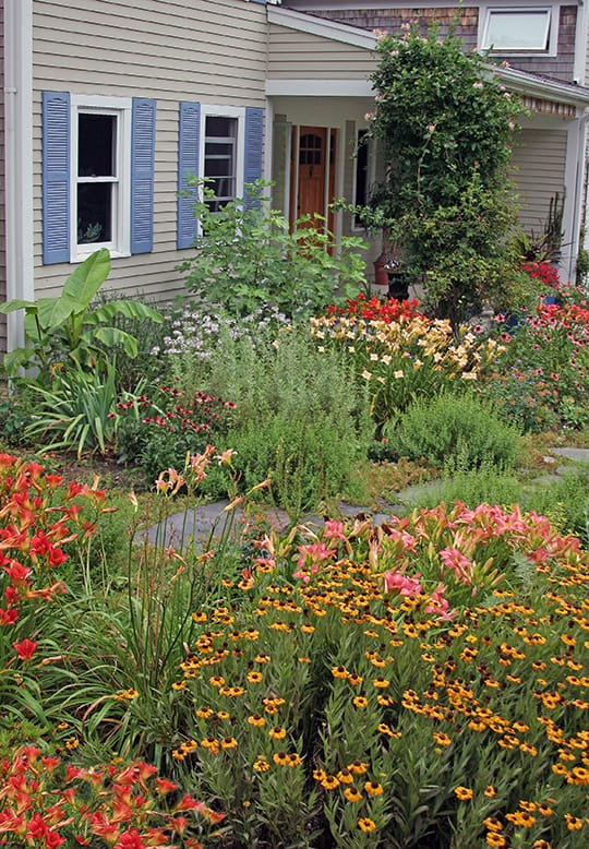 In the spring and early summer this garden is yellow and blue but it transforms to coral, peach and lavender in July.
