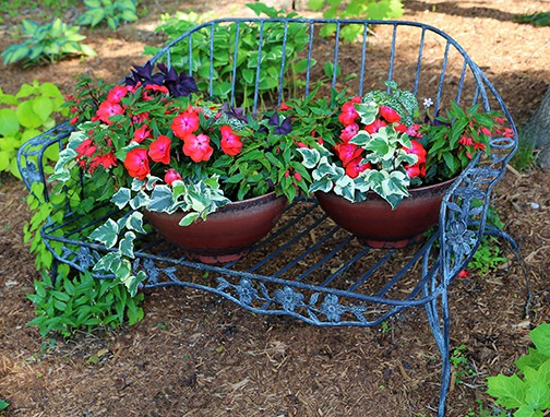 Independence From Hum-Drum Shade Plantings