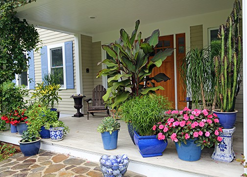 Front Porch Privacy? You Can Grow That!