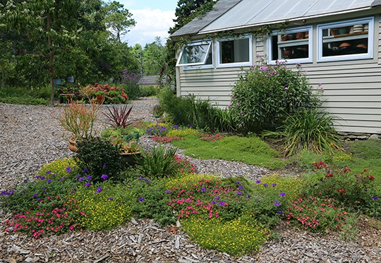Annuals for Dry Places